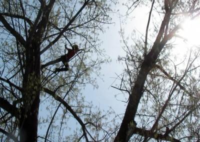 treeclimbing_1